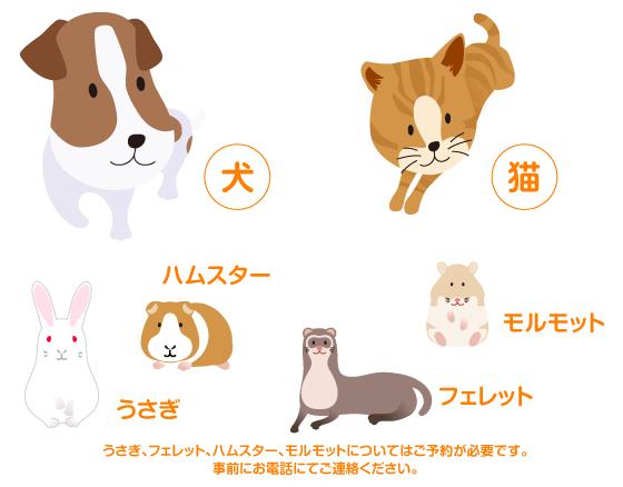 犬、猫。うさぎ、フェレット、ハムスター、モルモット